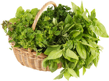 herb-basket